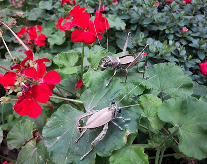 palm-leaf-made-insect-cricket