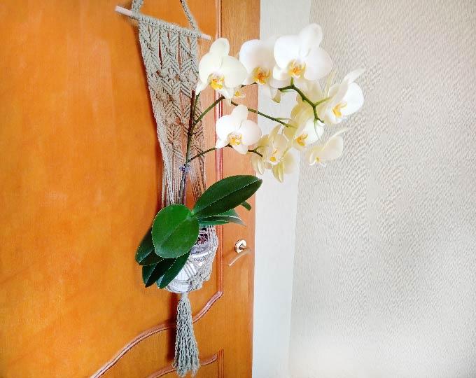 plant-hanger-flower-garden-with